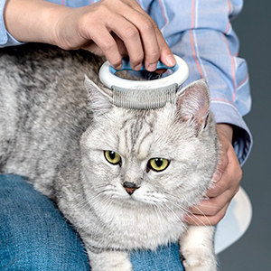 YOUR PET CARING ASSISTANT