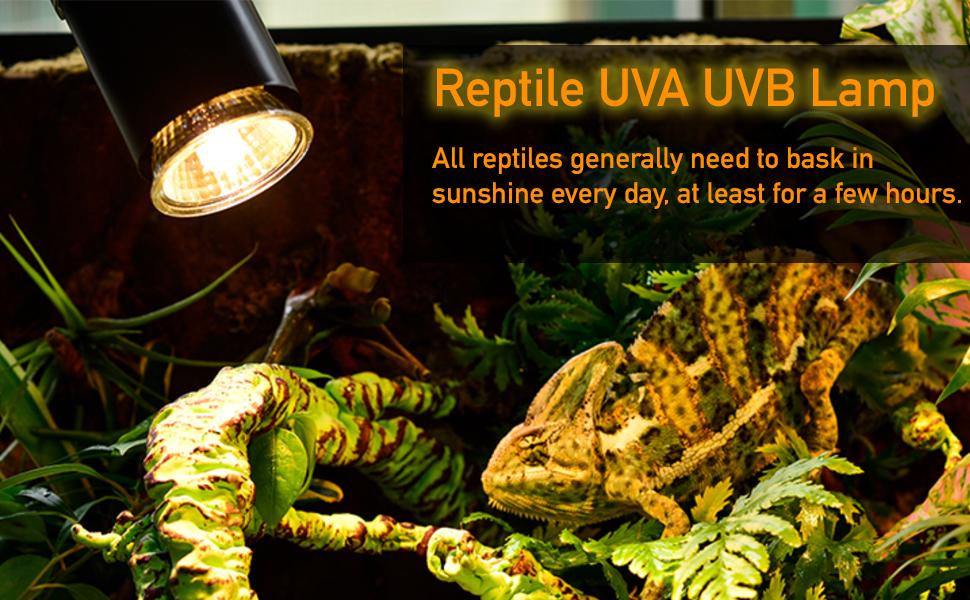 reptile lamp