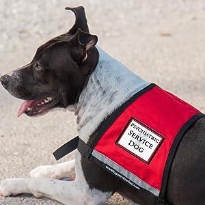 Psychiatric Service Dog Sew On Patch