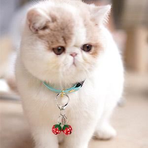 cat collar bells