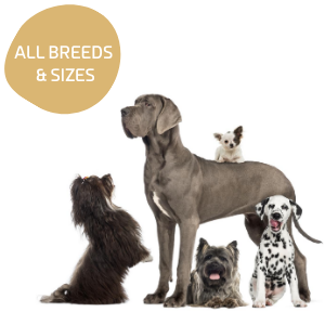 Dogs of all Sizes and Breeds