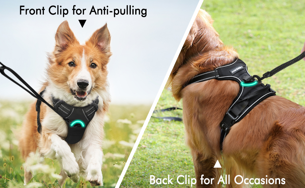 Rabbitgoo No Pull Adjustable Dog Harness - Designed for Your Dog, and You.