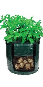 Potato fabric pots