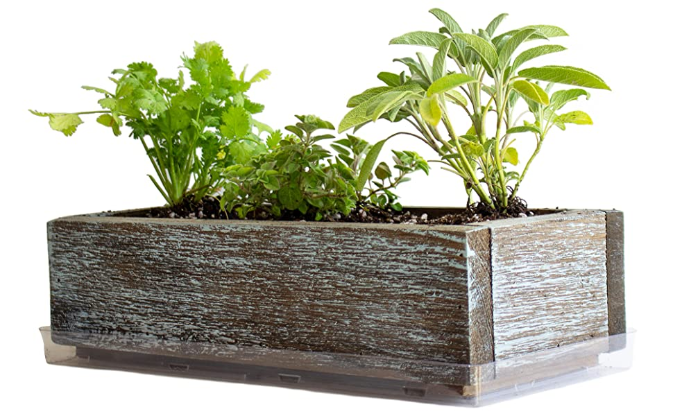 barnwood style culinary herb kit herb seeds