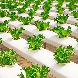 hydroponics drip emitter lines clog mesh stop plants planting soil water grow medium coco coir