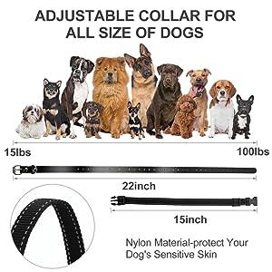 large dog training collar