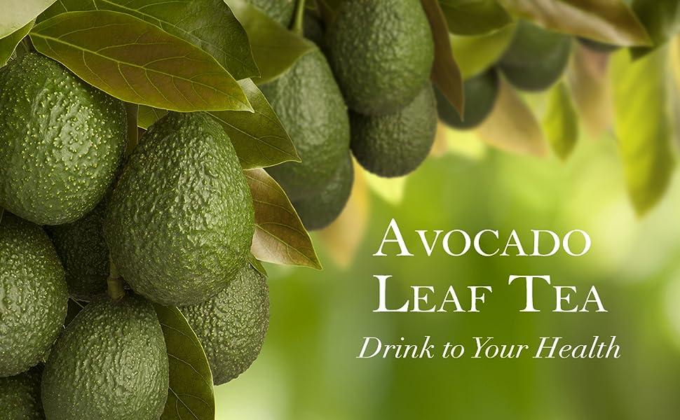 Healthy Avocado Leaf Tea