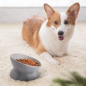 small dog bowl dish