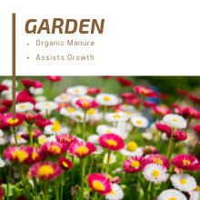 Mesmara Garden organic manure growth