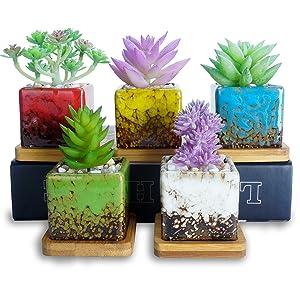 succulent pots  2 inch