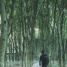 Merino Wool Hiking