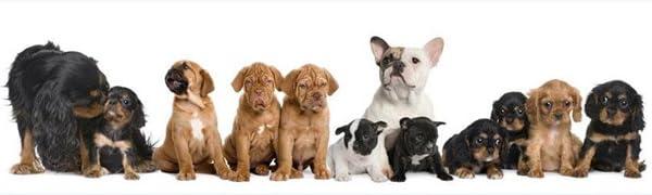 Pet Surpplier