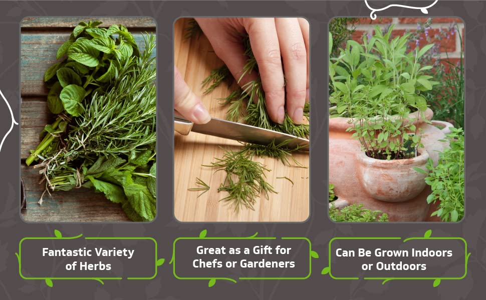 fantastic variety of herbs, great as a gift, can be grown indoors or outdoors