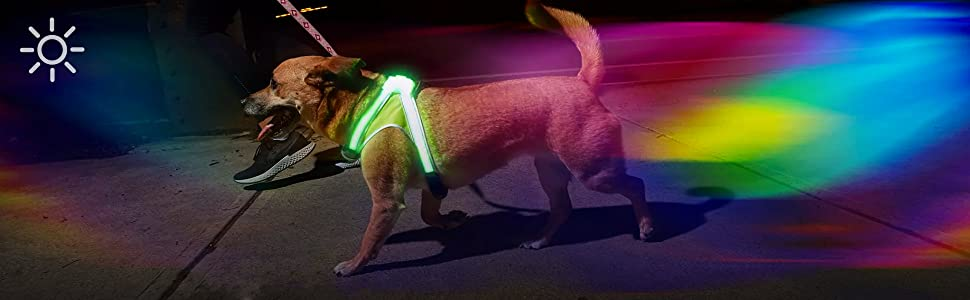 LightHound | Illumination