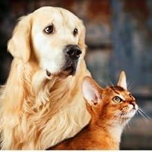 anxiété peur souffrance chien chat réduire bien être cbd poil avis thesoapery  alimentaire