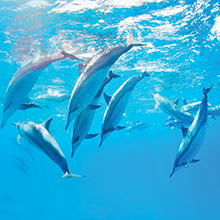 Our Commitment to Dolphins and Whales