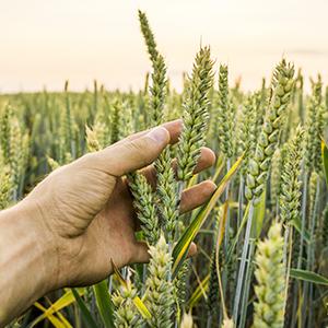 coltivazione cielo terra vitamine sale sali minerali vitamina c a d e adatto vegani senza eccipienti