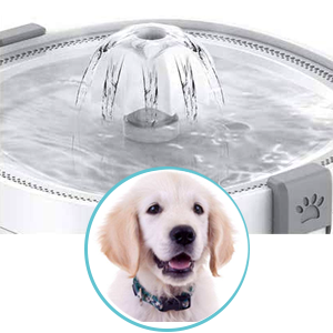 water fountain for dog