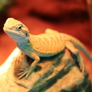 smart temperature controller for Reptile