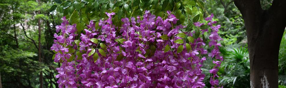 wisteria in purple