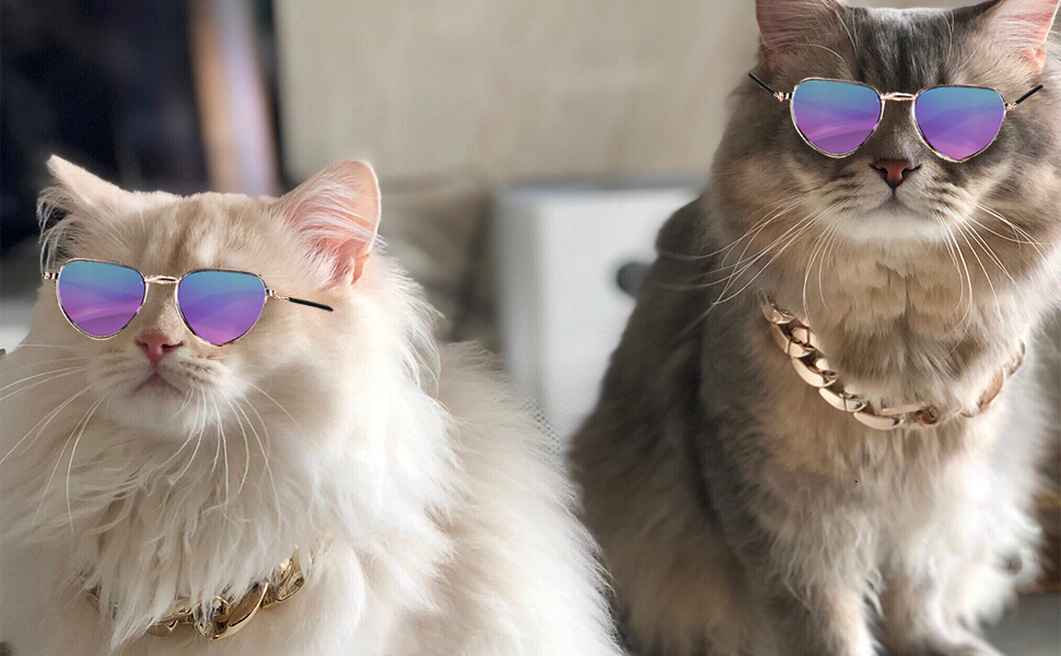 There are two cats wearing the gold collar and sunglasses.