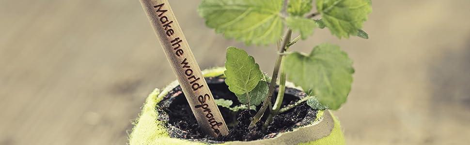 pencils plants sprout