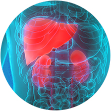 Solaray Liver Blend SP-13 Healthy Liver & Kidney Support l 100 VegCaps
