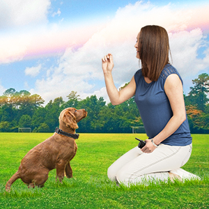 How to Use the Dog Training Collar Properly?