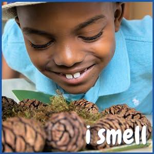 sense of smell, forest, sensory bin filler, toddler activity kit, kids sensory, loose parts play