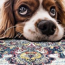 Pet friendly rug