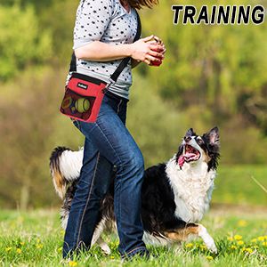 doggie training