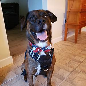 dog collar girl