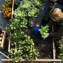 Child planting garden; family gardening