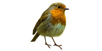 Gardigo Oiseau