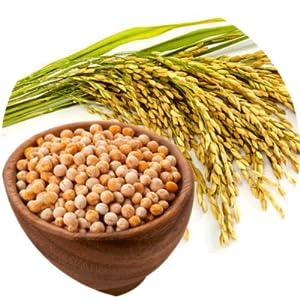 vegane Proteinriegel - vegan Eiweissriegel Protein Riegel mit Reisprotein + Erbsenprotein