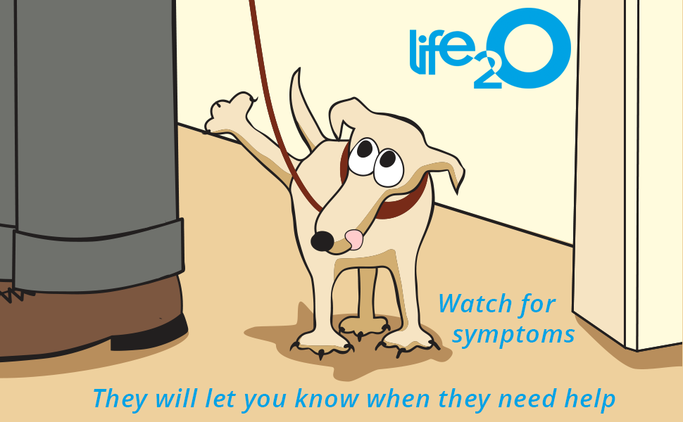 life2o pet urine strips symptoms