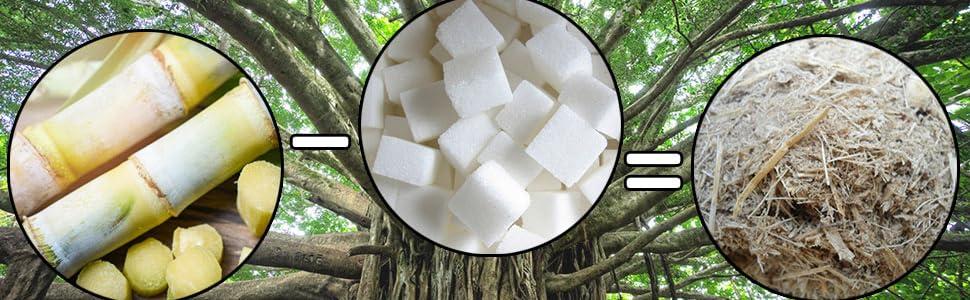 sugarcane, bagasse