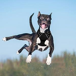 easy walk harness ruffwear harness dog harness medium harness for small dogs harness dog