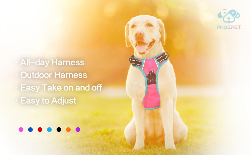 2019 Dog Harness