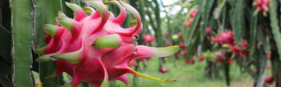 organic fruits organic fruit snack snacks