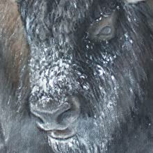 the thundering herd close up web image