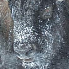 Le troupeau Thundering Close Up Image Web