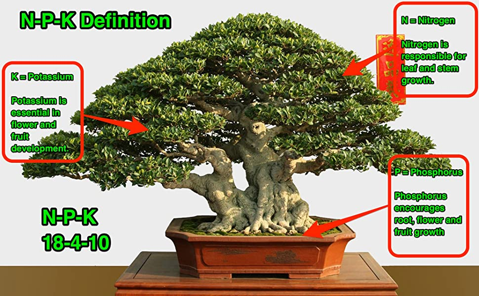 Amazon Com Bonsai Tree Fertilizer 2 4 Lb Jar Tons Of Micro Nutrients Vital For Bonsai Health Slow Release Apply Every 30 Days All Purpose Fertilizer All Purpose Fertilizer Garden Outdoor