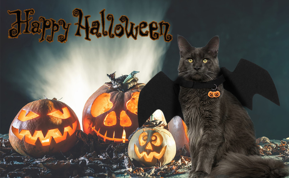 There is a cat wearing a halloween bat wings.