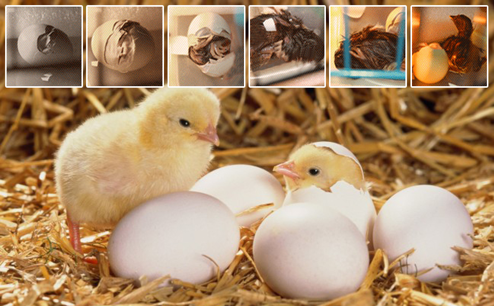 Digital Mini Fully Automatic Egg Incubator 9-12 Eggs Poultry Hatcher for Chickens Ducks Goose Birds