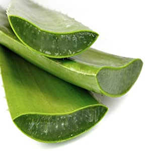 Aloevera for Sun Protection