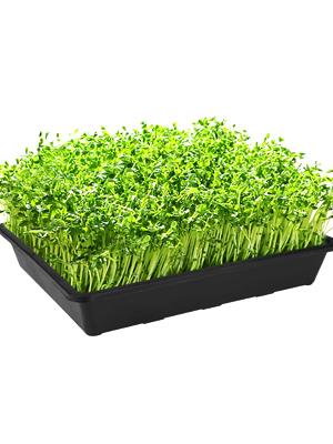 Seed Starter Trays for Seedlings