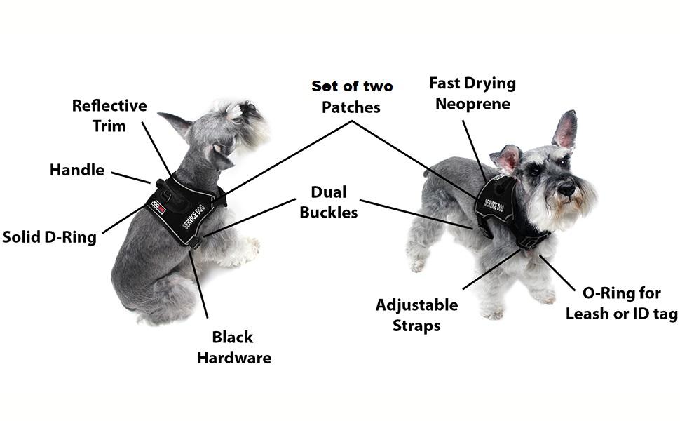 info dog img