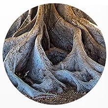 seaweed fertiliser miracle gardening plant grow buddha bonsai tree compost multipurpose feed house