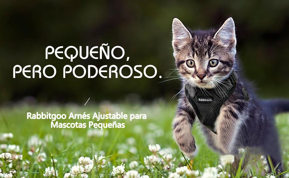 rabbitgoo Arnés Gato Pequeños Ajustable Cómodo Transpirable ...